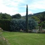 Mittelmeerzypressen